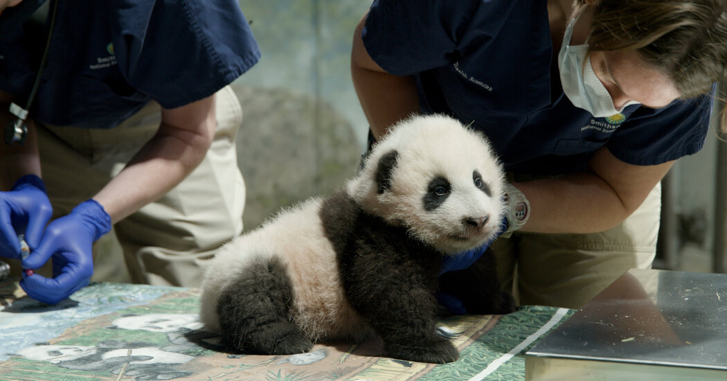 Smithsonian Museums Will Reopen in May (Yes, You Can Visit the Pandas)